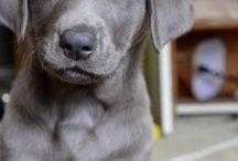 Future Pups