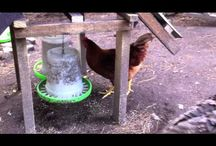Build a chicken Coop / Backyard chicken cage