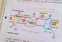 Biologie/Lernen