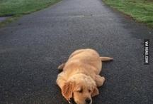 Prince Sammy Dog
