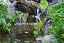 Waterfalls and Water Gardens / by Waterfalls Fountains & Gardens Inc.