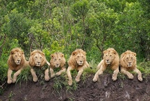 God's Glorious Creatures / by Jacqui Thuell