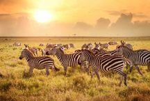 Afrika Tansania Sansibar
