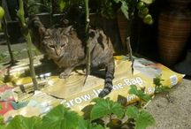 Cats / Mainly our 16 year old cat called Boudi and our 2 year old African cat, Missy.
