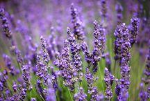 Aromathérapie / Retrouvez les recettes et autres potions magiques avec les huiles essentielles du blog actubio.fr!