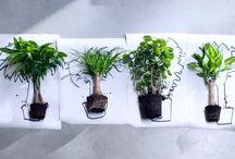 Woonplanten van de maand 2016