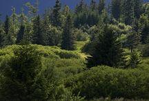 Curiosités naturelles en Alsace / En Alsace, évadez-vous dans une nature généreuse à la découverte de ses 21 réserves naturelles et de ses deux Parcs Naturels Régionaux. Des panoramas naturels uniques !