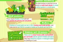 Garden Ideas / by Cat Lake
