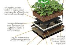 dom - rastliny na streche