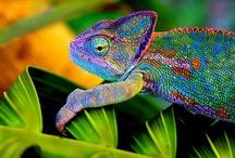 Frogs & Lizards / by Joyce Foster
