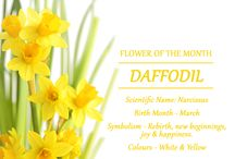 Flower of the Month / Flowers