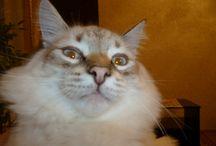 Cats / Домашние питомцы