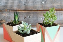 Succulents / Succulent and cactus plants. How to care for succulents and great planter ideas for them.
