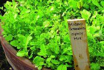 Micro greens / by Gloria King