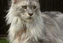 CATS. TOO MANY CATS!!! / adorbs