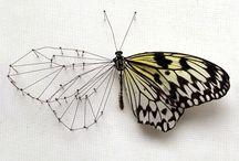 papillon papillon papillon