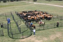 Corral Systems  / Priefert manufactures the best cattle working equipment on the market and it is essential to have a quality and efficient corral system when working your herd.   / by Priefert MFG