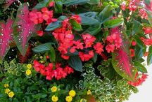 Gardens :)
