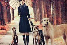 Galgo & Irish wolfhound