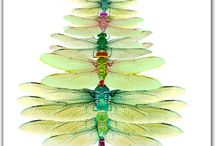 Art - Dragonfly  / Dragonfly items / by Rusty Tricycle