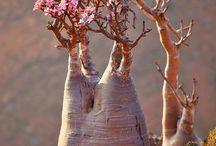 aparte planten en bloemen