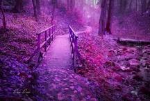 Purple / by Penny Byerley
