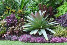Tropical Feature/Accent Plants / Tropical plants for accents and features.