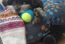 Yonge/Eglington Pups