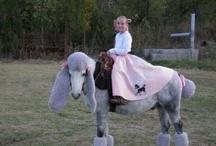 Hesteudklædning
