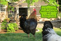 Chickens in suburbia / by Lisa Burke