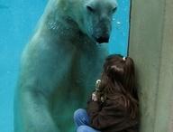 Polar Bears / by Angee Turnbull