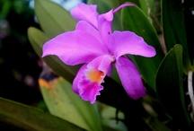 beautiful orchids / beautiful orchids