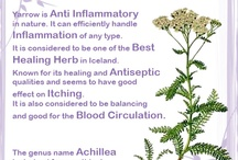 Medicinal Herbs / These are the medicinal herbs that Fjola Natural uses