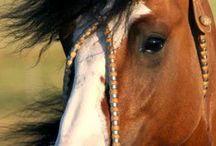 Cavalos Crioulos❤