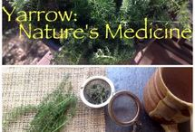 Foraging - Food & Herbs
