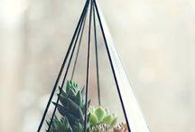 Plants & terrarium