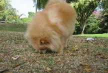 Actividad Canina