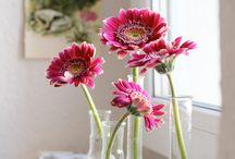 Pretty Flower (Hoa trang trí) / by TGT Media
