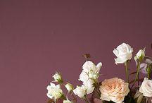 Florystyka / Rośliny, kwiaty, ogrody, wszelkie kompozycje.