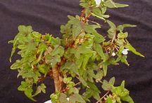 Favorite terrarium plants / Some favorite miniature plants great for terrariums.
