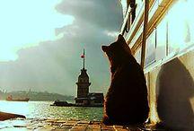 sude'nin kedi panosu