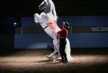 Gala of the Royal Horses, April 23 @7PM
