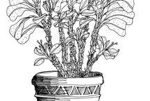 Line Drawing Plants