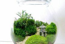 tanaman aquarium