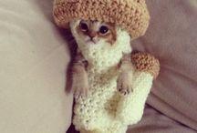 **gatinho#neko#cats**