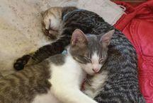 gatos / Hermosas fotos de felinos