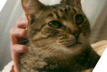 Furkids / Yes, we do have kids. Furkids. So there. / by Arlene Stillwell