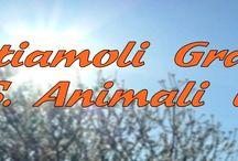 Aiuto animali in emergenza