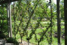 Garden / Our home Garden