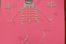 esqueleto actividades